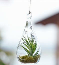 Airplant Terrarium