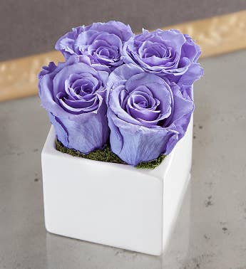 Preserved Lavender Roses by Luxe Bloom® - Small