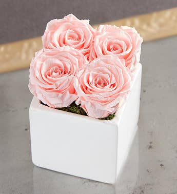 Preserved Pink Roses by Luxe Bloom® - Small