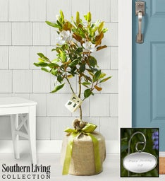 Magnolia Tree by Southern Living™