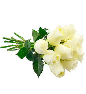 10 White Colombian roses