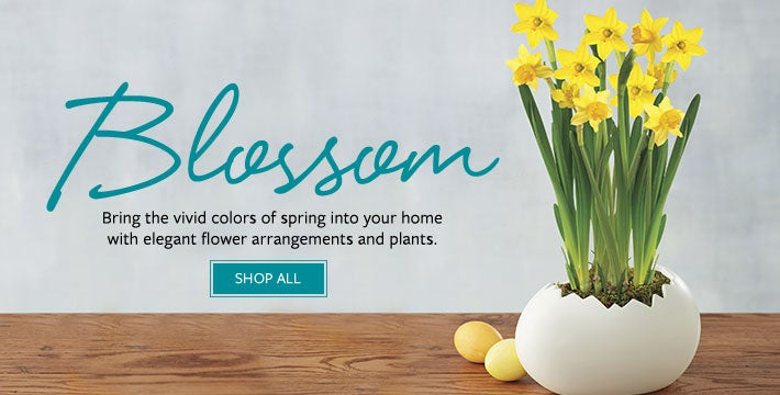 BLOSSOM. Bring the vivid colors of spring into your home with elegant flower arrangements and plants. SHOP ALL
