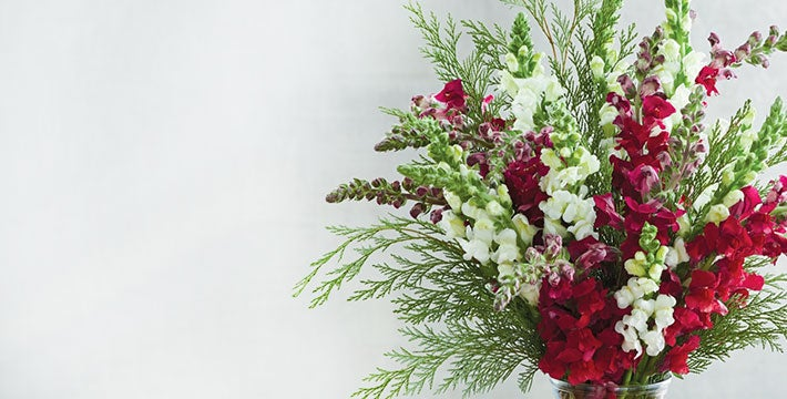 THE BEAUTY OF THE SEASON. Liven your home with joyful and vibrant arrangements or share holiday plant gifts that are guaranteed to dazzle.  SHOP ALL