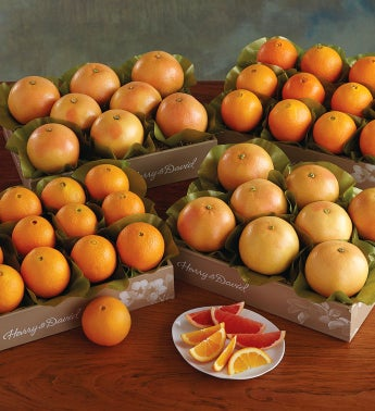 Navel Oranges and Grapefruit - Four Trays