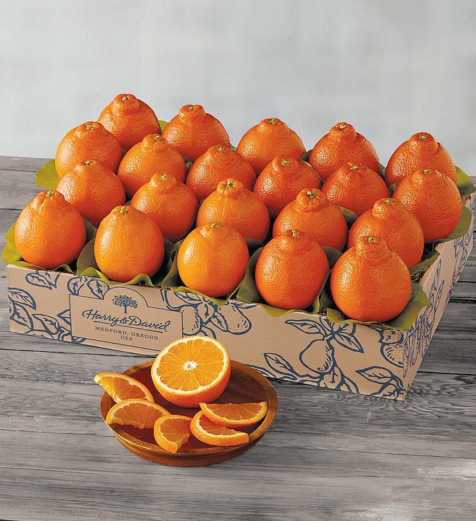Sugar Bellestrade Citrus