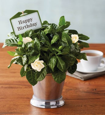 Happy Birthday Gardenia by Harry & David