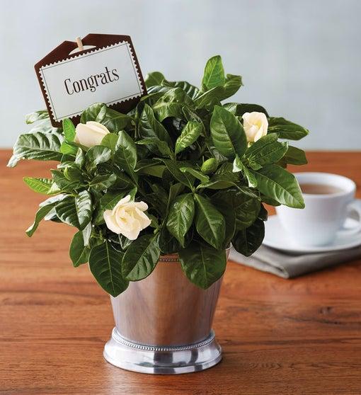 Congratulations Gardenia