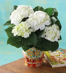White Hydrangea with Garden Journal