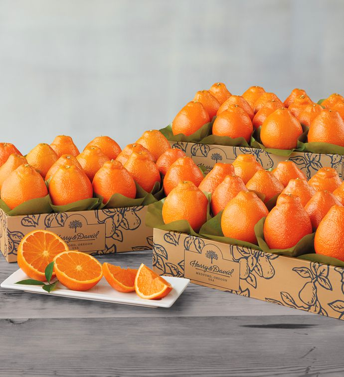 Cushmans Florida HoneyBells  Three Trays