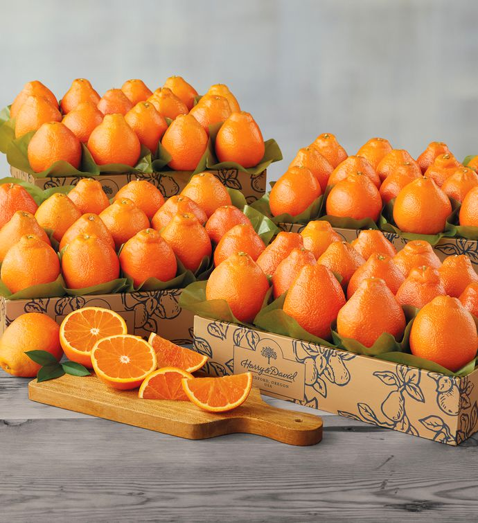 Cushmans Florida HoneyBells  Four Trays