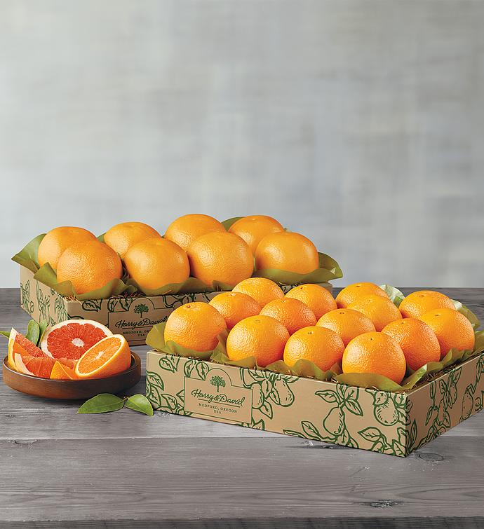 Navel Oranges and Grapefruit  Two Trays