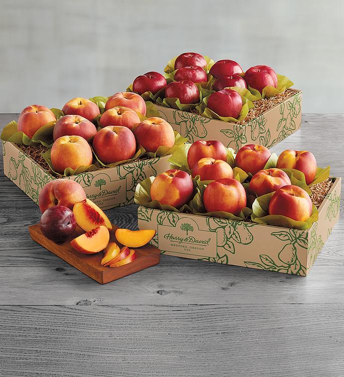 Triple Treattrade Grand Summer Fruit