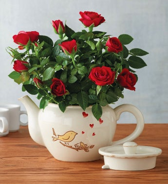 Songbird Mini Rose Teapot