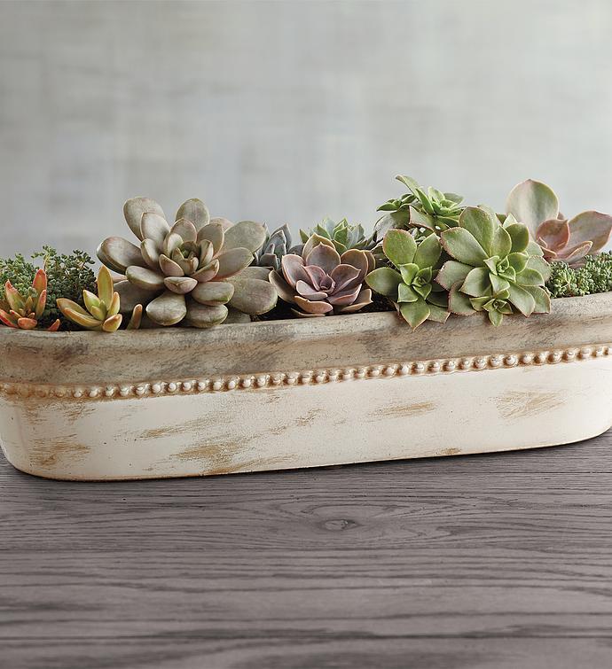 Succulents Centerpiece
