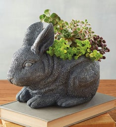 Bunny with Succulents