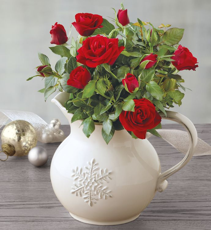 Red Mini Rose in Pitcher
