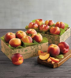 Oregold Peaches and Nectarines