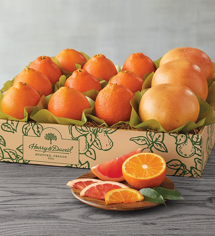 HoneyBells and Red Grapefruit  One Tray