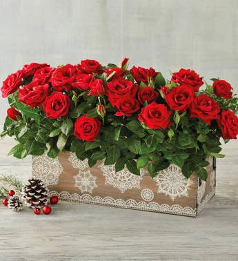 Red Mini Rose Crate