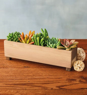 Succulents in Rustic Planter