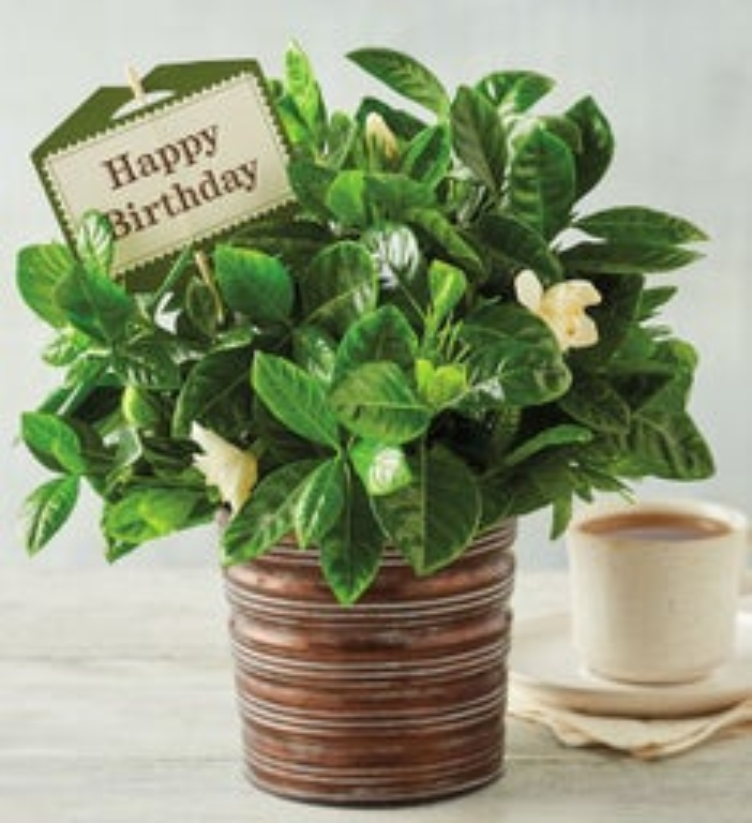 Happy Birthday Gardenia