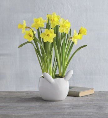 Bunny Tail Daffodils