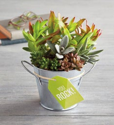 You Rock Succulent Gift