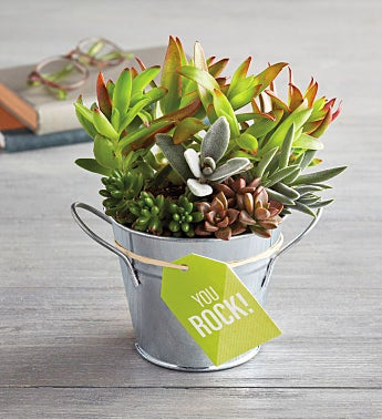"""You Rock"" Succulent Gift"