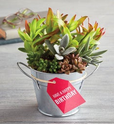 Have a Happy Birthday Succulent Gift
