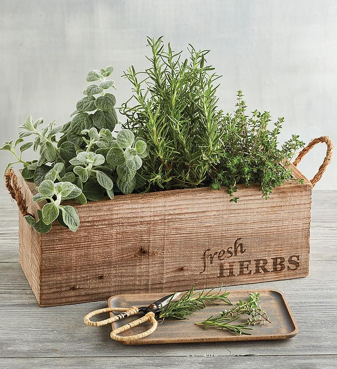 windowsill herb garden mothers day gift