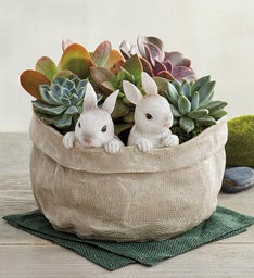 Succulents in Easter Bunny Bag