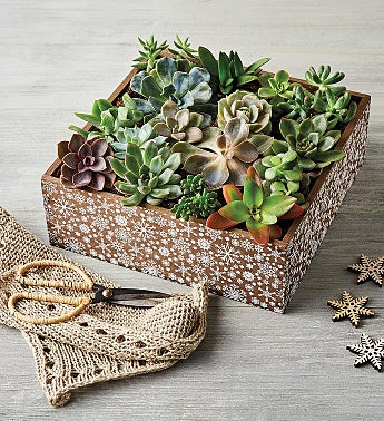 Holiday Succulent Centerpiece