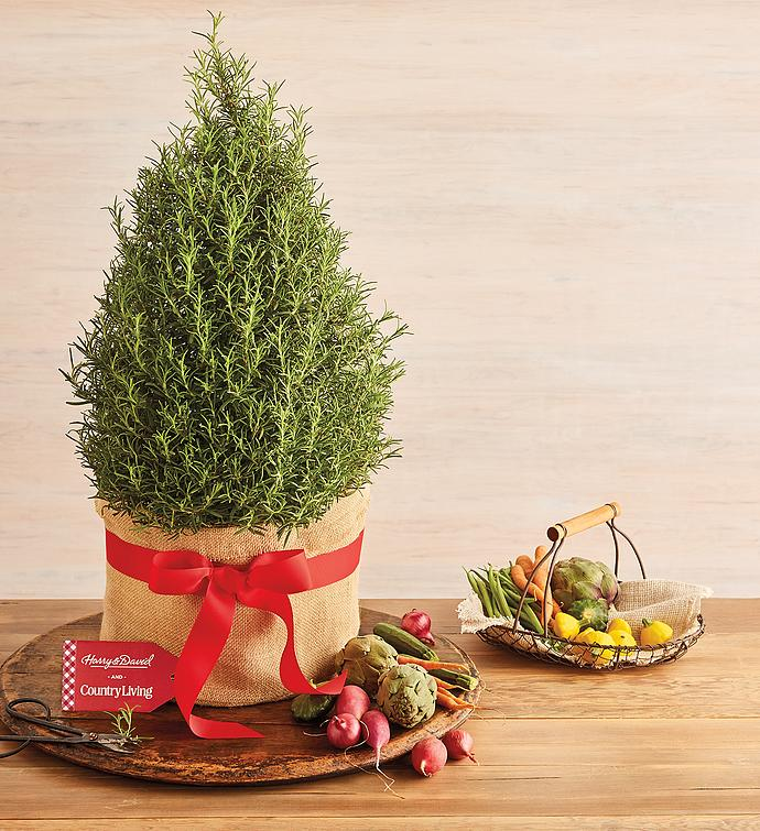 Holiday Rosemary Topiary
