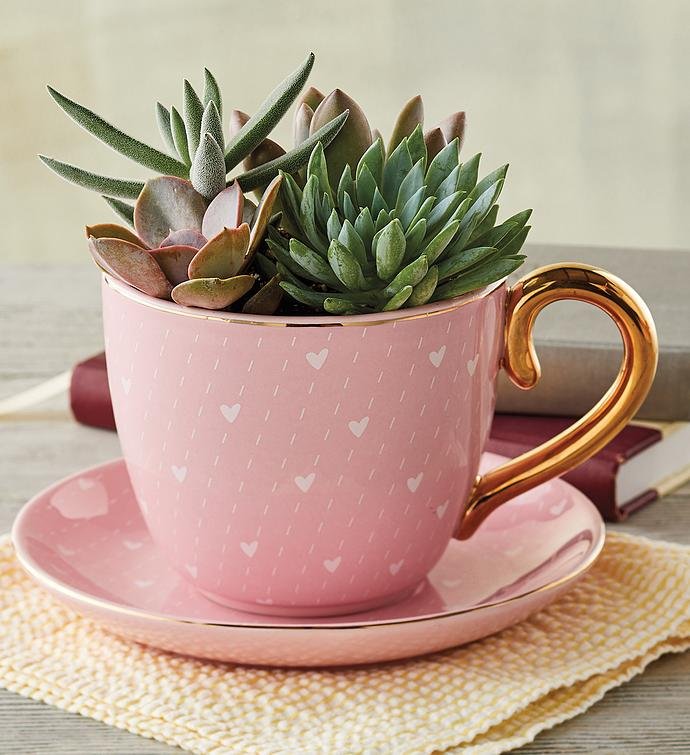 Teacup with Succulents