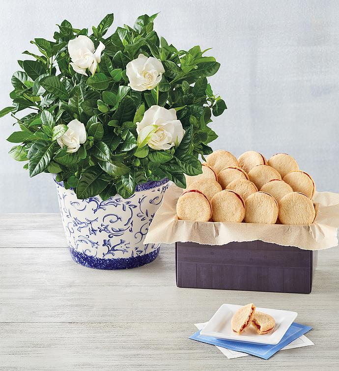 Gardenia with Cookies